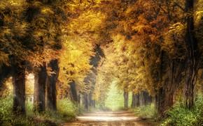 Picture road, autumn, trees, nature