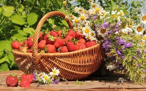 Wallpaper greens, summer, the sun, flowers, basket, chamomile, strawberry, berry, bells