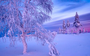 Picture winter, snow, tree, ate, Finland, Finland, Lapland, Lapland