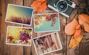 Picture autumn, leaves, photo, background, camera, colorful, happy, wood, background, autumn, leaves, autumn