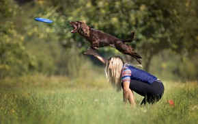 Picture greens, summer, grass, girl, the sun, trees, jump, glade, dog, plate, blonde, disk, bokeh, catches, …