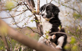 Picture look, flowers, branches, pose, tree, black and white, dog, spring, garden, baby, cute, puppy, trunk, ...