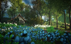 Picture flowers, nature, house