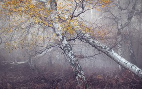 Picture autumn, forest, fog