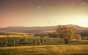 Picture field, autumn, nature