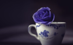 Picture FLOWER, MACRO, MOOD, ROSE, CUP