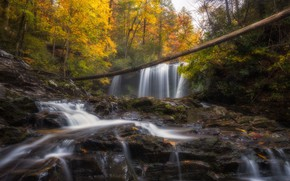 Picture autumn, forest, water, trees, branches, nature, stones, rocks, waterfall, stream, log, cascade, autumn