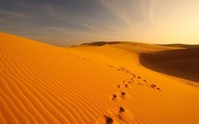 Picture sand, traces, desert, dunes, Oman, Wueste & Gebirge