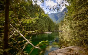 Picture forest, mountains, river