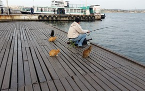 Picture cats, fishing, waiting