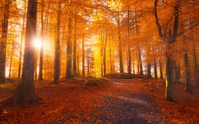 Picture road, autumn, forest, leaves, the sun, rays, light, trees, branches, nature, Park, lights, stones, mood, …