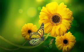 Picture butterfly, background, gerbera