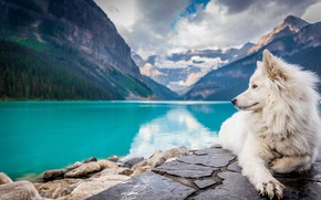 Picture lake, mountain, dog, white, landscape, dog, mountains, lake, looking