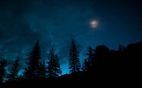 Picture The sky, Night, Stars, The moon, Forest, Canada, Spruce, A month, Banff National Park