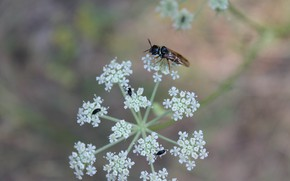 Picture insects, on the flower, fly