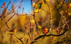 Picture autumn, light, branches, berries, leaf, blur, fruit, bokeh, hawthorn