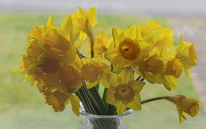 Picture flowers, bouquet, yellow, daffodils