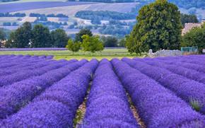 Wallpaper lavender, trees, Provence, France, field, bokeh