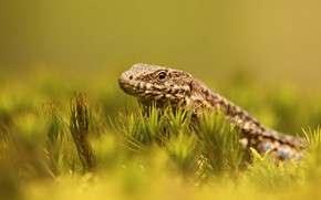 Picture look, plants, lizard, green background