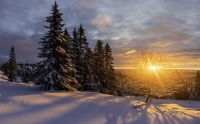 Picture winter, the sun, snow, trees, landscape, sunset, nature, ate, shadows, Jørn Allan Pedersen