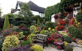 Picture flowers, Park, garden