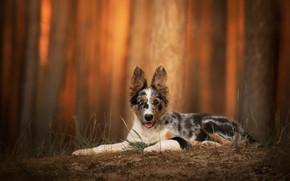 Wallpaper nature, background, dog
