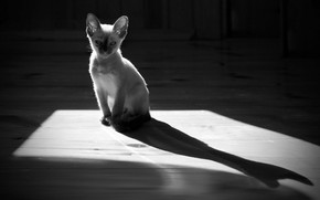 Picture light, shadow, kitty