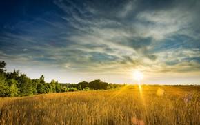 Picture field, landscape, sunset, nature, beauty