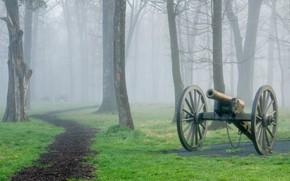 Picture forest, grass, fog, Park, track, gun