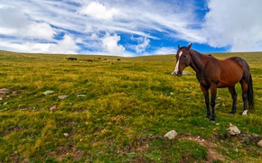 Picture grass, clouds, horse, meadow