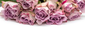 Picture white, background, roses, bouquet