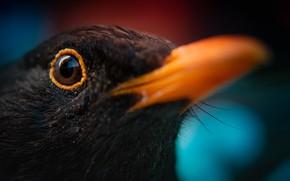 Picture macro, nature, bird