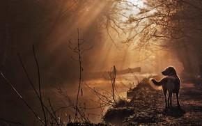 Picture fog, river, dog