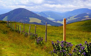 Picture flowers, mountains, the fence