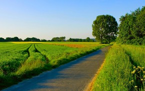 Picture road, field, summer, trees, nature