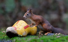Picture protein, bokeh, rodent, Shoe