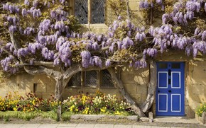 Picture flowers, house, England, the door
