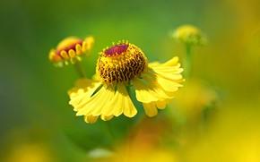 Picture macro, nature, petals