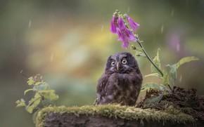 Picture flower, nature, rain, bird, moss, chick, owlet