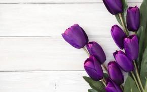 Picture bouquet, tulips, Purple