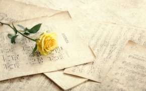 Picture flower, notes, rose