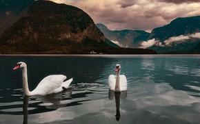Picture the sky, landscape, mountains, birds, clouds, nature, lake, Austria, swans, Hallstatt, Hallstatt, Hallstatt