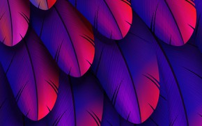 Picture colorful, feather, abstract 3D