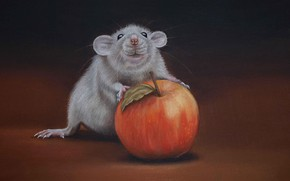 Picture pose, the dark background, figure, graphics, Apple, texture, mouse, mouse, art, muzzle, grey, painting, rat, …