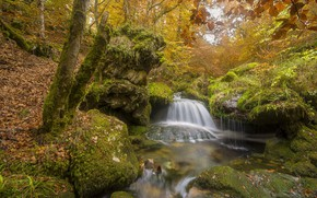 Picture autumn, forest, trees, branches, stones, foliage, waterfall, moss, stream, slope, boulders, mossy