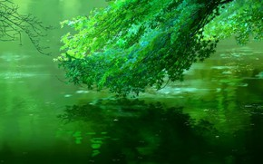 Picture Reflection, Tree, River, Foliage