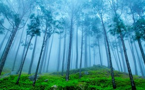 Picture forest, fog, India, The Himalayas