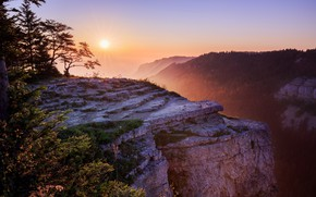 Picture forest, the sun, trees, branches, fog, open, rocks, dawn, morning