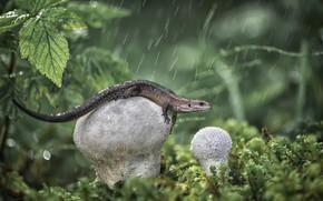 Picture rain, mushrooms, lizard, raincoat