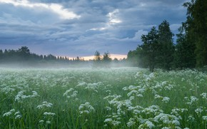 Picture The sky, Clouds, Field, Fog, Forest, Grass, The edge